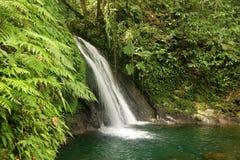 Piękna siklawa w tropikalnym lesie deszczowym, Guadeloupe, wyspy karaibskie, Francja Obrazy Royalty Free