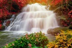 piękna siklawa w tropikalnym lesie deszczowym przy phu balii berk góry phet Fotografia Stock