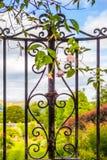 Piękna, stara ogrodowa brama z wspinaczkowym bluszczem, Obrazy Stock