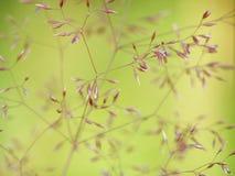 piękna trawa Fotografia Stock