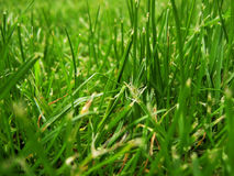 piękna trawa Obrazy Stock
