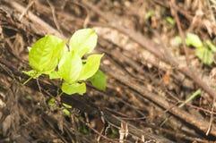piękna trawa na zaniechanej ogród przestrzeni Fotografia Stock
