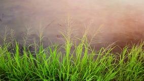 piękna trawa zieleni Obrazy Royalty Free