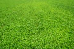 piękna trawa zieleni Zdjęcia Royalty Free