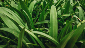 piękna trawa zieleni Zdjęcie Royalty Free