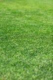piękna trawy zieleni tekstura Zdjęcie Stock