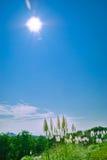 piękna wiosna Zdjęcia Stock