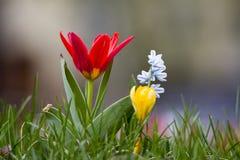 piękna wiosna kwiat Fotografia Stock