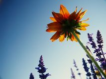 piękna wiosna kwiat fotografia royalty free