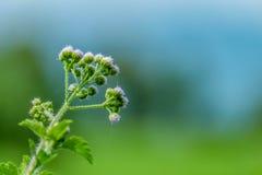 piękna wiosna kwiat Zdjęcia Royalty Free