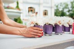 Piękna wiosna kwitnie w purpurowych szklanych wazach Fotografia Stock
