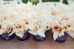 Piękna wiosna kwitnie w purpurowych szklanych wazach Fotografia Royalty Free