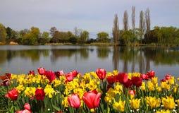 Piękna wiosna tulipanu scena zdjęcie stock