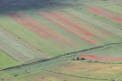 Piękna wsi scena, abstrakcjonistyczny kwiat Umbria, centrala Italy-8 Obraz Royalty Free