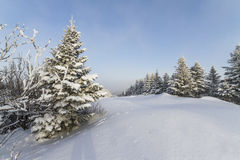 Piękna zima w górach. Zdjęcie Royalty Free