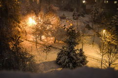 Piękna zimy noc w parku Fotografia Stock