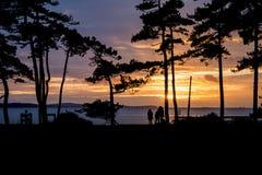 Piękna zmierzch sylwetka drzewa i morze w tle i p Obraz Stock