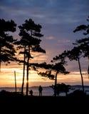 Piękna zmierzch sylwetka drzewa i morze w tle i p Zdjęcia Royalty Free
