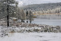 Piękne altai góry w zimie Siberia Fotografia Royalty Free