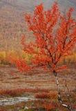 piękne barwy jesieni Zdjęcia Stock