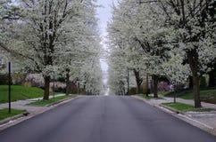 piękne drzewa Zdjęcia Royalty Free