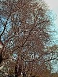 piękne drzewo fotografia royalty free