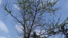 piękne drzewo obrazy royalty free