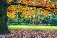 piękne drzewo jesieni Obraz Stock