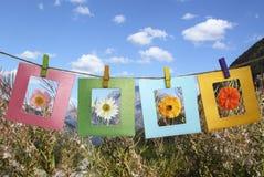 Piękne fotografie kwiaty w ramie Zdjęcie Stock
