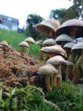 piękne grzyby Obraz Royalty Free
