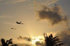 Piękne kanie na niebie Lankijczyka niebo obrazy royalty free