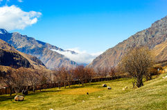 Piękne Kaukaz góry, Gruzja Zdjęcia Royalty Free
