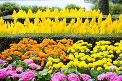 piękne kolor kwiatów obraz stock