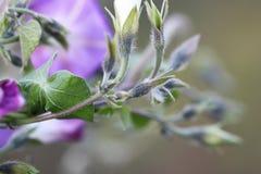 piękne kwiat purpurowy Zdjęcia Stock