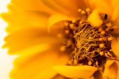 piękne kwiat purpurowy Zdjęcia Royalty Free