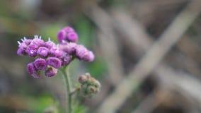 piękne kwiat purpurowy Obraz Royalty Free