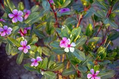 piękne kwiaty Zdjęcia Royalty Free