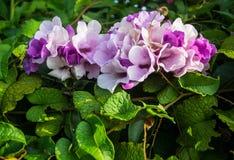 piękne kwiaty Fotografia Stock