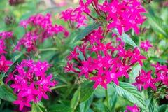 piękne kwiaty Zdjęcie Royalty Free