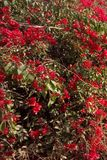 piękne kwiaty Zdjęcie Stock