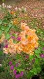 piękne kwiaty Zdjęcia Stock
