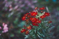 piękne kwiaty ogrodu Fotografia Royalty Free