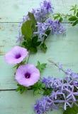 piękne kwiaty purpurowych Fotografia Stock