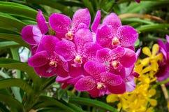 piękne kwiaty storczykowi Obraz Stock