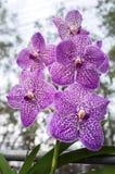 piękne kwiaty storczykowi Obrazy Royalty Free