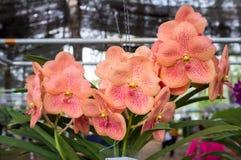 piękne kwiaty storczykowi Zdjęcie Stock
