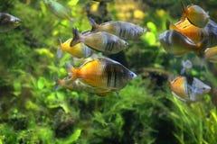 piękne niebieskie akwarium ryb obraz royalty free