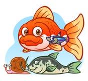 piękne niebieskie akwarium ryb Zdjęcie Stock
