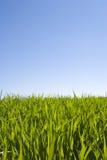 piękne niebieskie niebo zielonej trawy Zdjęcie Stock