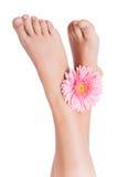 Piękne nogi Zdjęcie Royalty Free